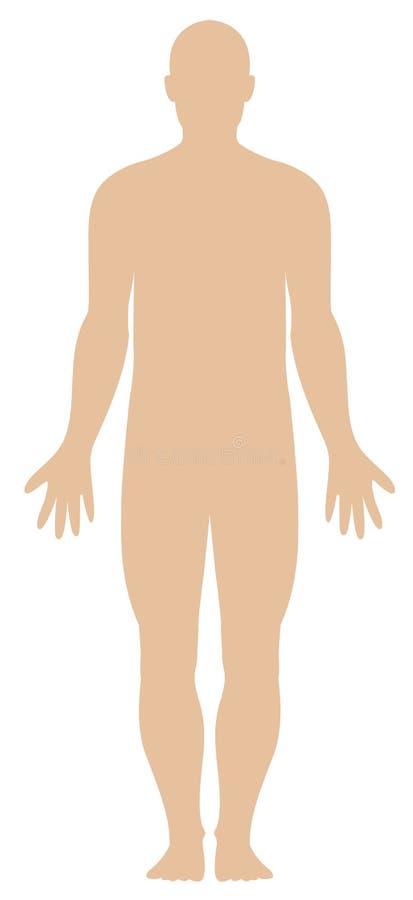 huvuddelhumanöversikt stock illustrationer