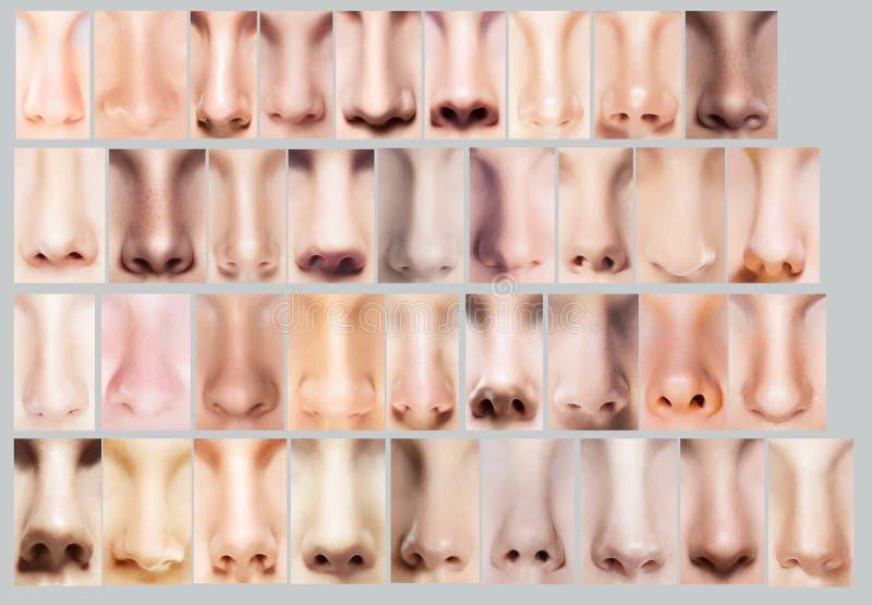 huvuddelpar varje krama annat trycka på för delar Stor variation av kvinnors näsor Uppsättning av näsborrar royaltyfri foto