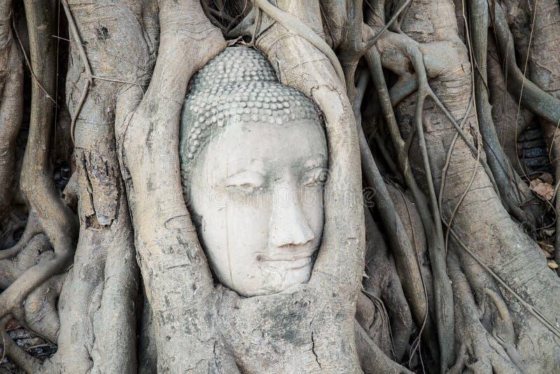 Huvudet av Buddhastatyn i trädet rotar på den Wat Mahathat templet, arkivfoton