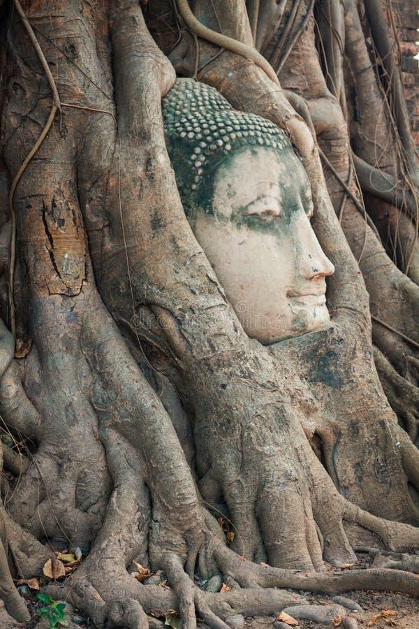 Huvudet av Buddhastatyn i trädet rotar på Wat Mahathat, Ayuttha arkivbild