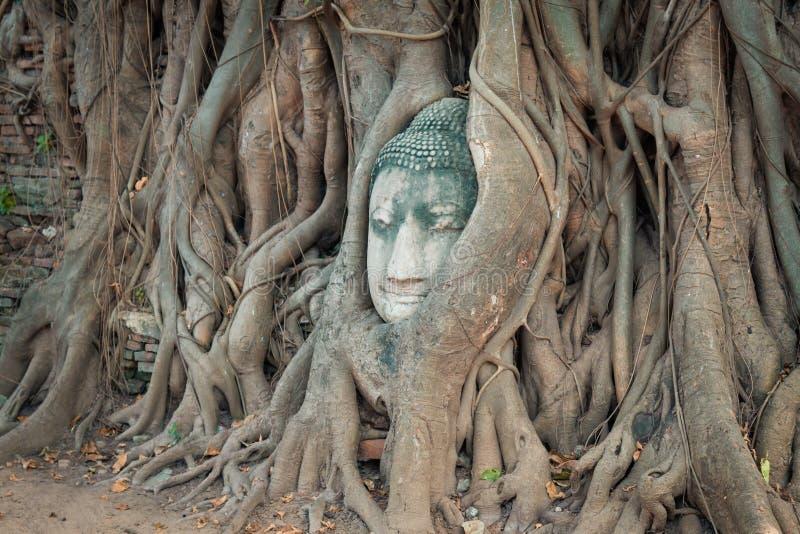 Huvudet av Buddhastatyn i trädet rotar på Wat Mahathat, Ayuttha arkivfoto