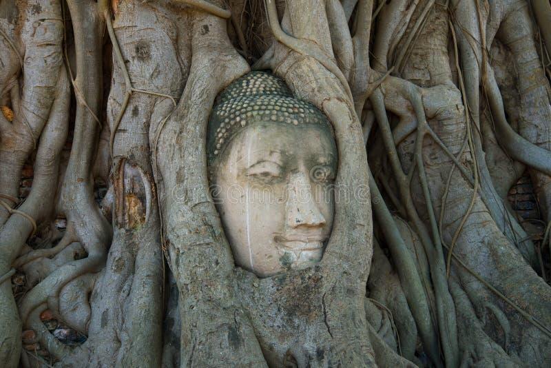 Huvudet av en forntida skulptur av Buddha i träd rotar Symbolstäder av Ayutthaya, Thailand arkivfoto