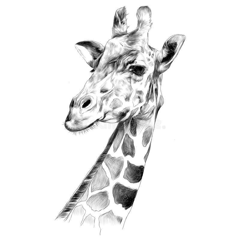 Huvudet av en giraff skissar royaltyfri illustrationer