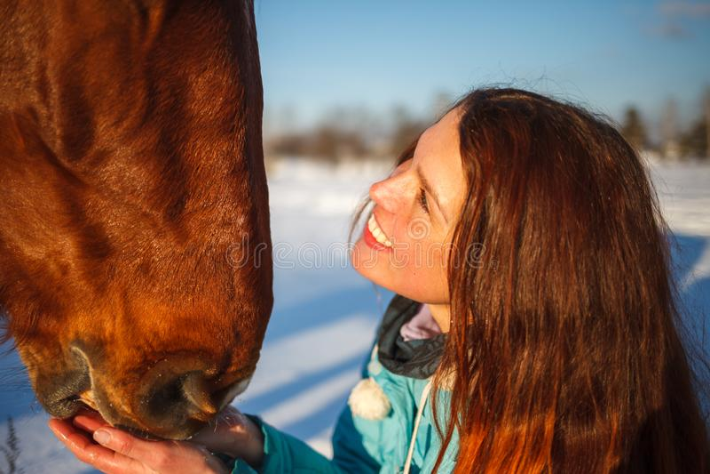 Huvudet av en häst och en flickas händer stänger sig upp Hon matar den röda hästen arkivfoto