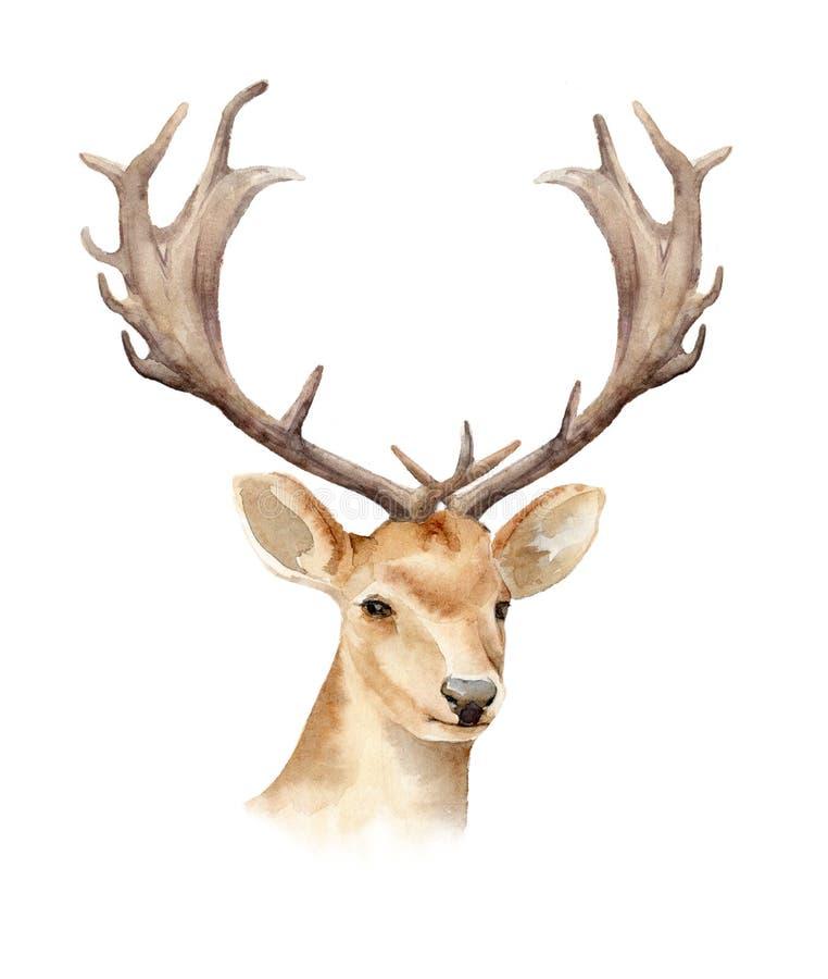 Huvudet av en manlig hjort med horn Boho mall som planlägger affischer som gifta sig inbjudningar, kort royaltyfri illustrationer