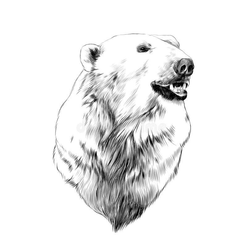 Huvudet av isbjörnen vektor illustrationer