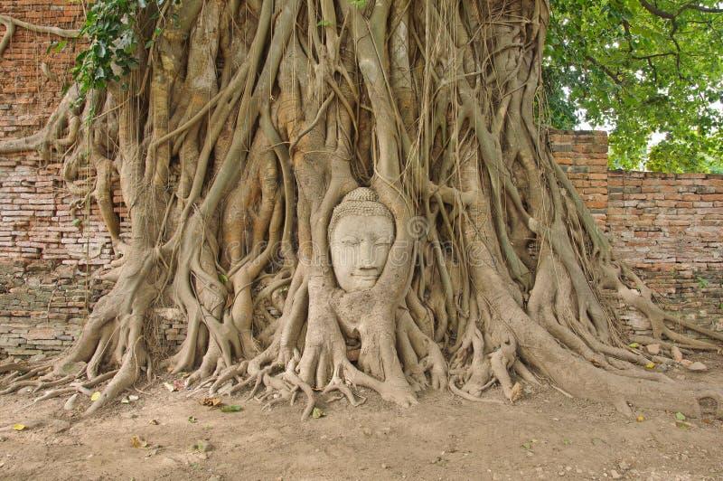 Huvudet av sandsten buddha i bodhitreen rotar fotografering för bildbyråer