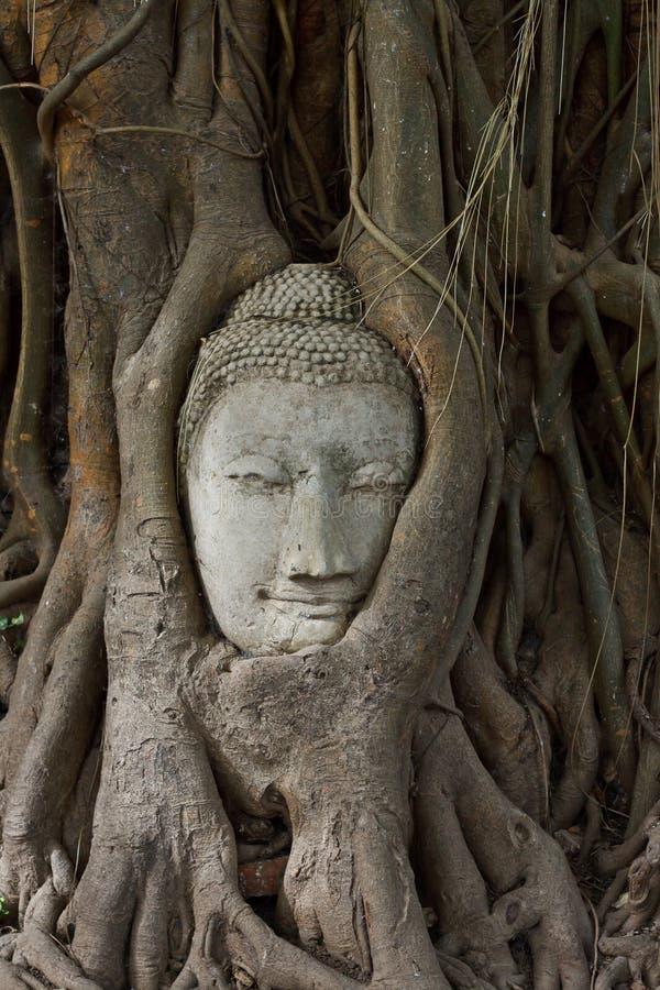 Huvudet av sandsten buddha i bodhitreen rotar arkivbilder