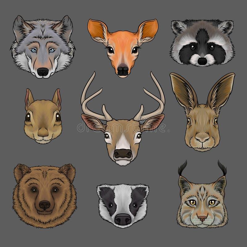 Huvudet av vilda djur ställde in, ståenden av drog vektorn för vargen, för doen, för tvättbjörnen, för ekorren, för hjortar, för  stock illustrationer