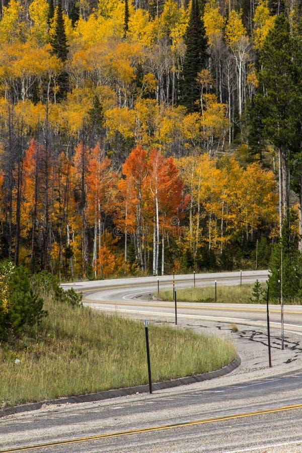 Huvudväg i toppiga bergskedjan Madre berg Wyoming arkivfoto