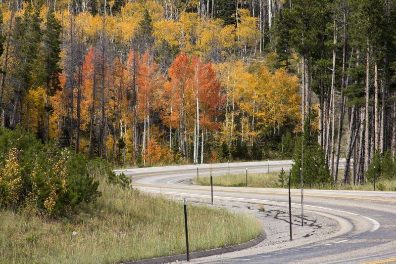 Huvudväg i toppiga bergskedjan Madre berg Wyoming royaltyfri bild