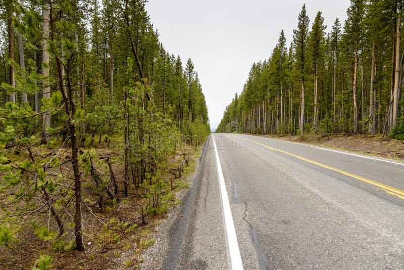 Huvudväg till och med en skog royaltyfri bild