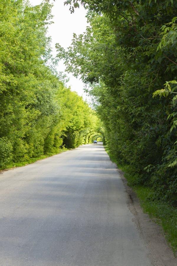 Huvudvägväg, bilritter i de naturliga bågarna för tunnel av lövverk arkivfoton