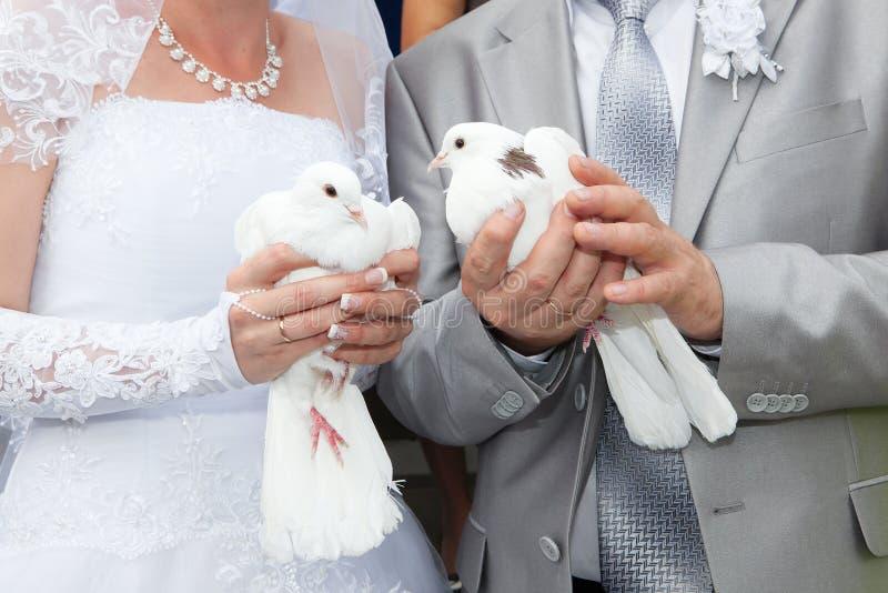 Huwelijksduiven in handen de bruidegom en de bruid royalty-vrije stock afbeeldingen