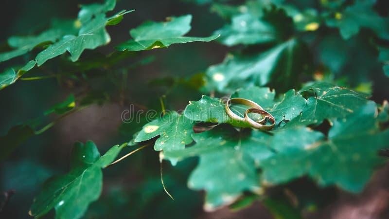 Huwelijksverlovingsringen Symbool van liefde en loyaliteit stock illustratie