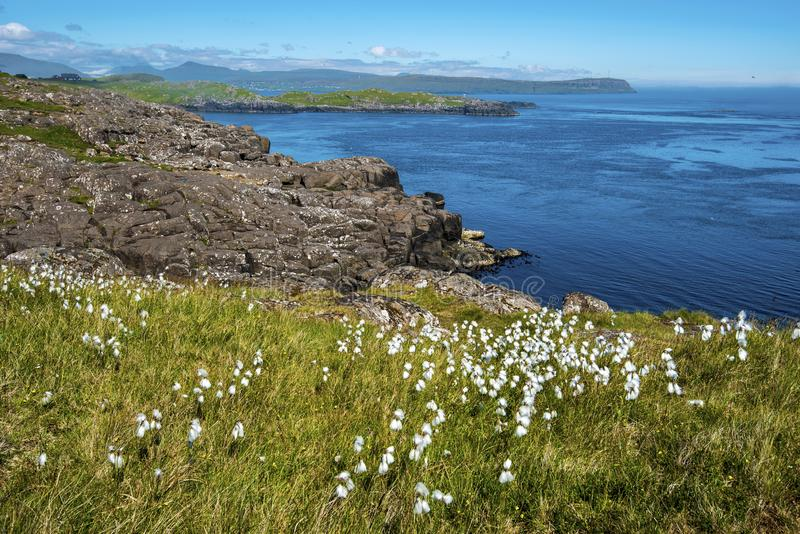 Hvitisandur Seashore landscape. In Faroese island of Streymoy near Torshavn. The grassland covered with Eriophorum plants is at foregroung royalty free stock photos