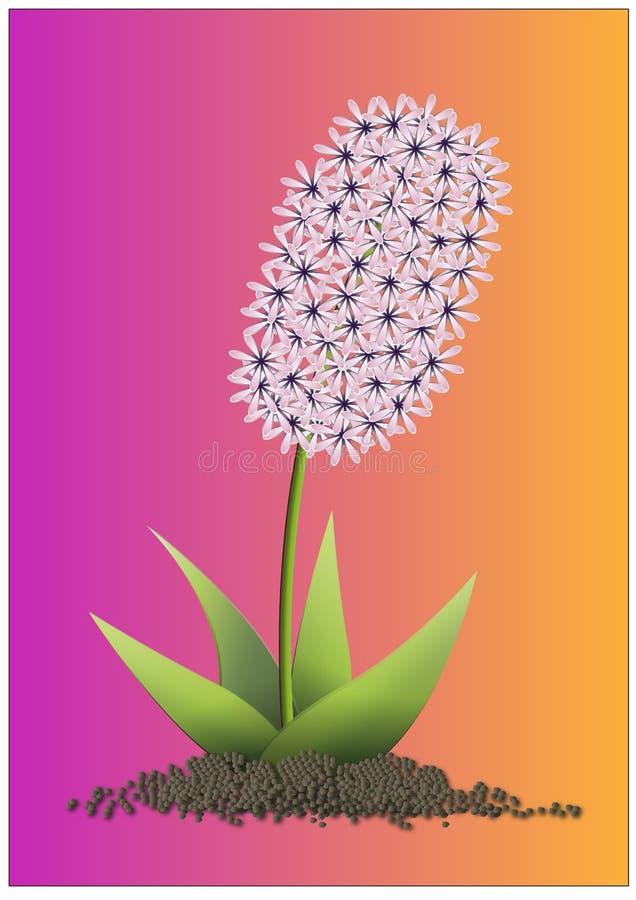 Hyacint  imagem de stock royalty free
