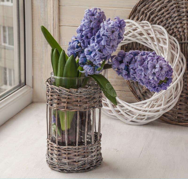 Hyacintblom i fönstret fotografering för bildbyråer