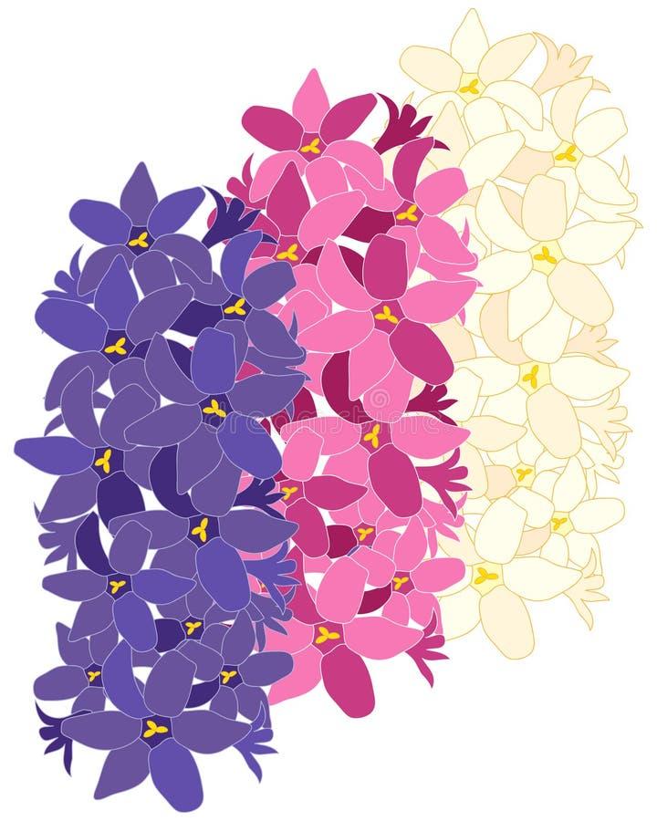 Hyacintdesign royaltyfri foto