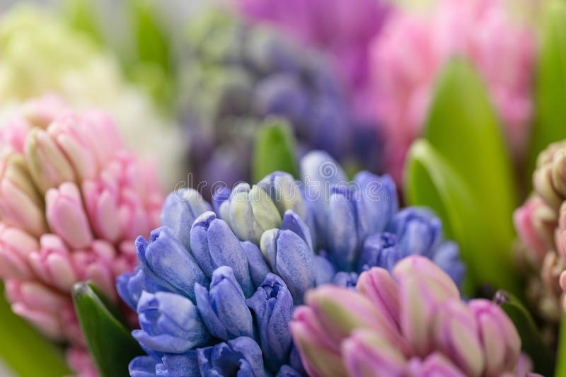 Flower Shop Concept. Mixed Color. Fresh Spring Flowers In Refrigerator