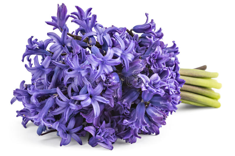 Hyacinth flower bouquet stock photo. Image of bouquet - 76307048