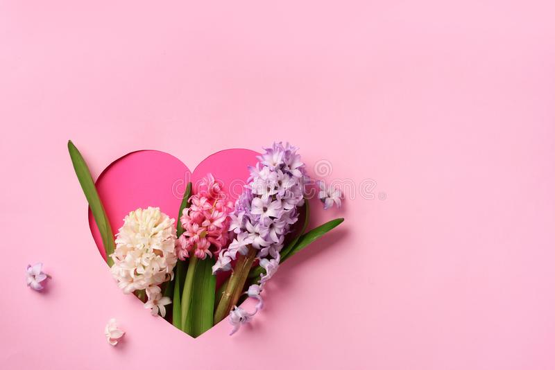 Hyacinth flowers in hole in heart shaped form over pink punchy pastel background. Top view, flat lay. Banner. Spring, summer or stock photos