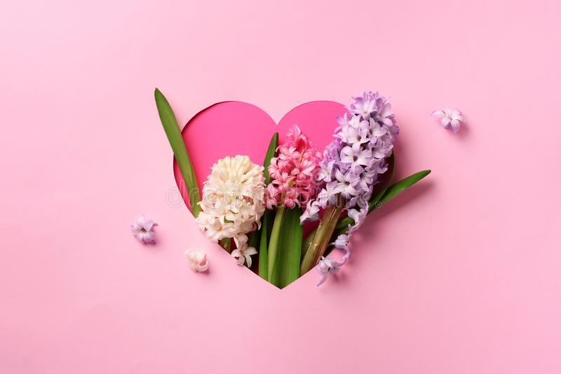 Hyacinth flowers in hole in heart shaped form over pink punchy pastel background. Top view, flat lay. Banner. Spring, summer or stock photography