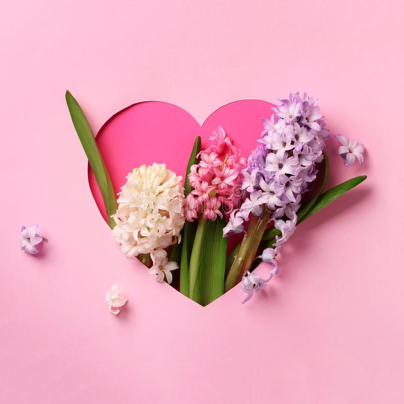 Hyacinth flowers in hole in heart shaped form over pink punchy pastel background. Top view, flat lay. Square crop. Spring, summer stock photos
