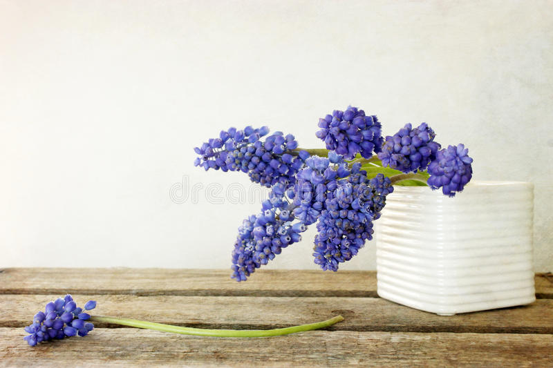 Hyacinth Muscari Flowers. On the old board stock photos