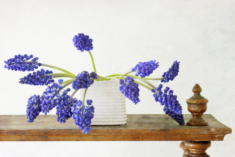Hyacinth Muscari Flowers royalty free stock photo