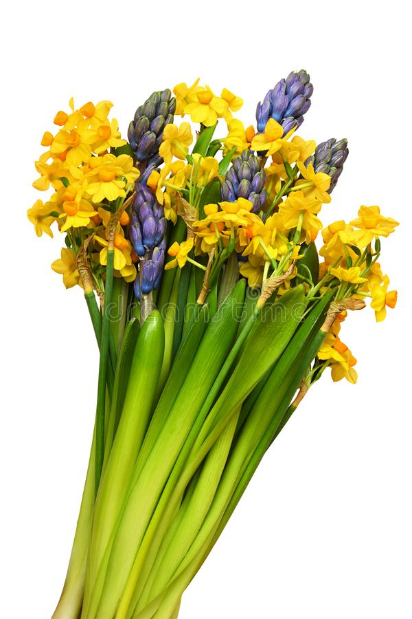 Hyacinth and narcissus flowers in a spring bouquet royalty free stock photo