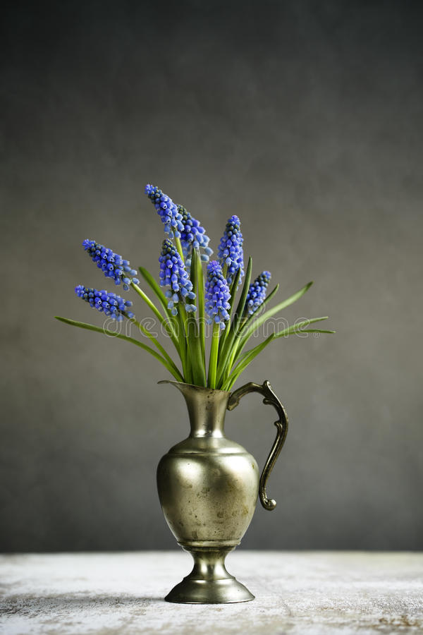Hyacinth Still Life images stock