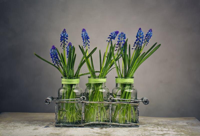 Hyacinth Still Life fotos de stock royalty free