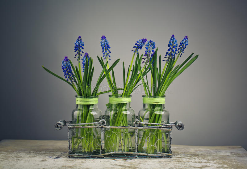 Hyacinth Still Life fotografia de stock royalty free