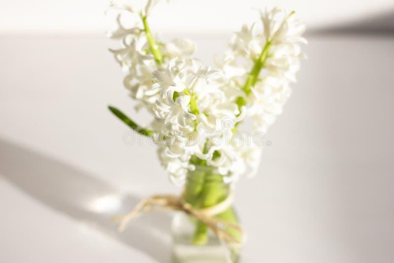 Hyacinths flowers spring stock image