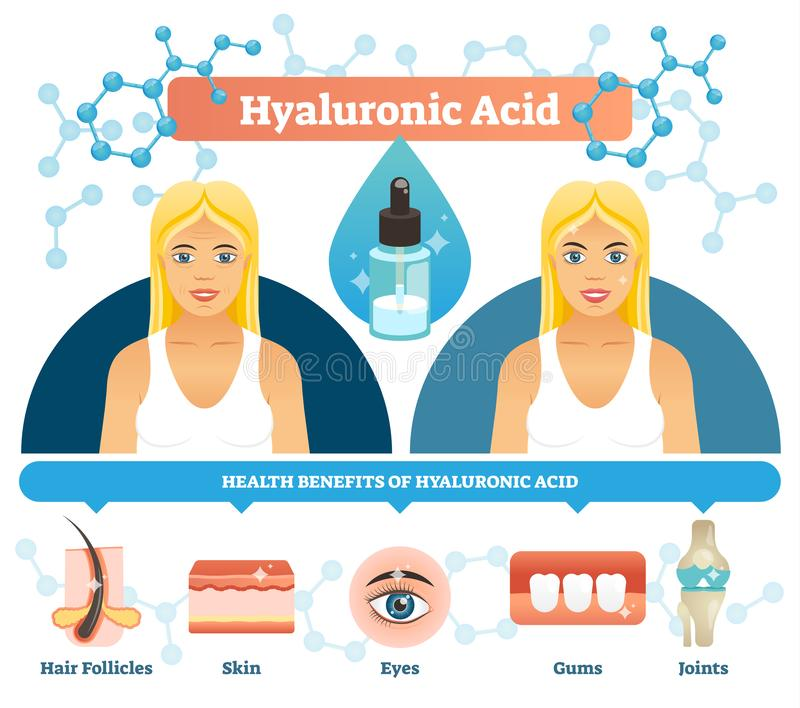 Hyaluronic acid vector illustration. Anti aging cell health benefits. royalty free illustration