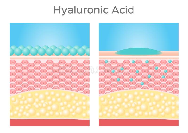 Hyaluronic zuur/huid royalty-vrije illustratie