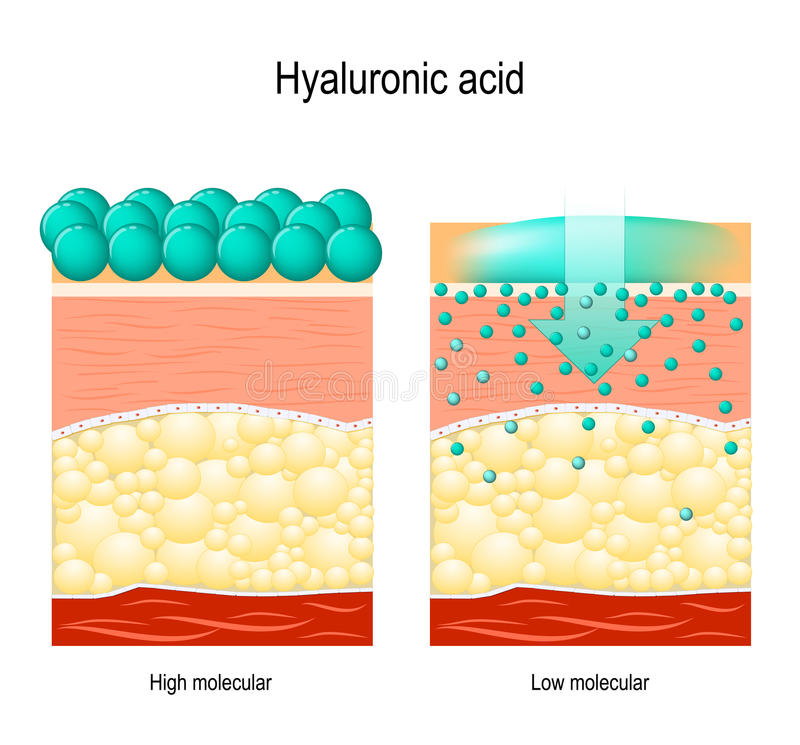 Hyaluronic zuur Hyaluronic zuur in huid-zorg producten stock illustratie