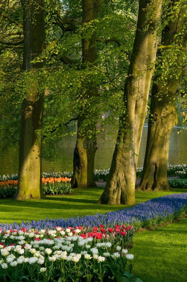 Hyazinthe der geläufigen Traube der Tulpen lizenzfreie stockfotos