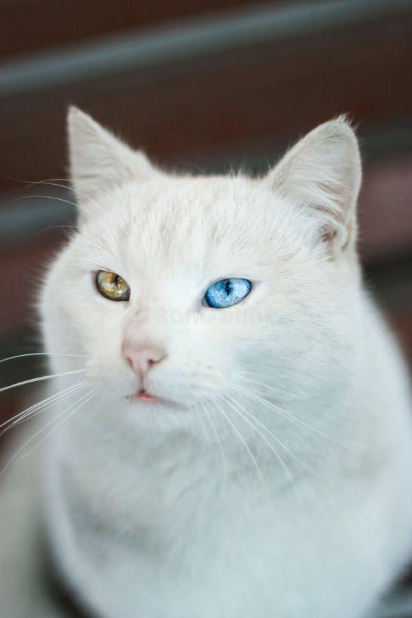 Hybrid cat stock image