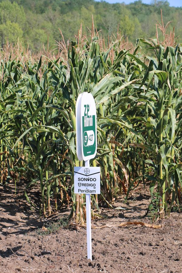 Hybrid crops sign. POZAREVAC, SERBIA - August 03: Corn crop sign that marks genetically modified seeds used to saw in Pozarevac, Serbia - August 03, 2017; The royalty free stock photo
