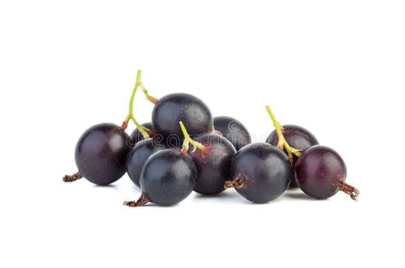 Hybride de Gooseberry et de Courant noir Josta photo libre de droits