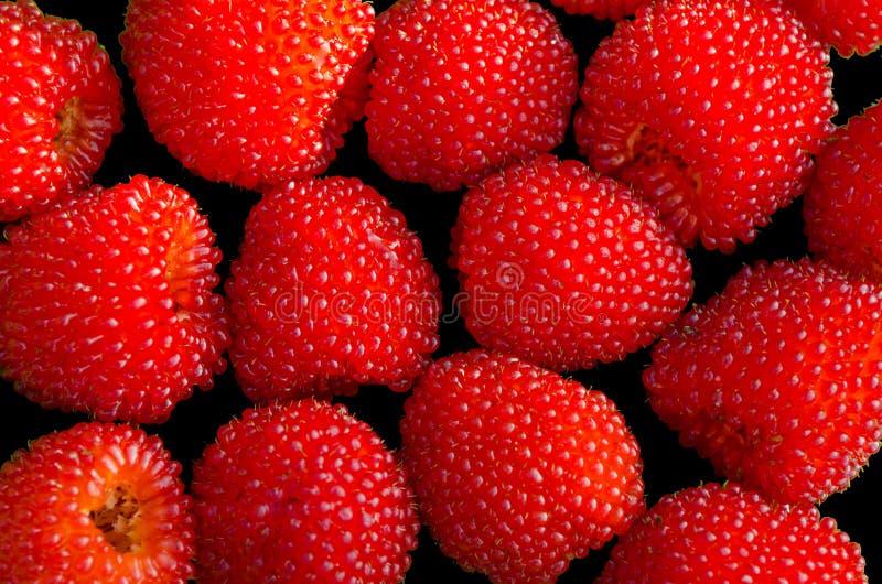 Hybride van frambozen en aardbeien stock foto's