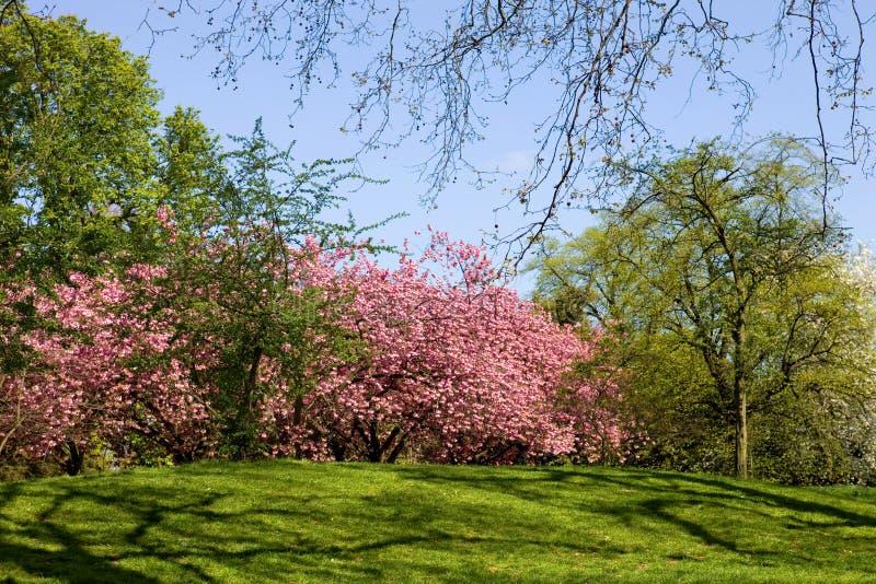 Hyde Park royaltyfria foton