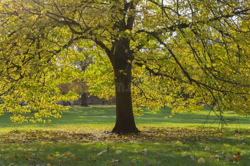 Hyde Park, Autumn colorfull, London, England royaltyfri bild