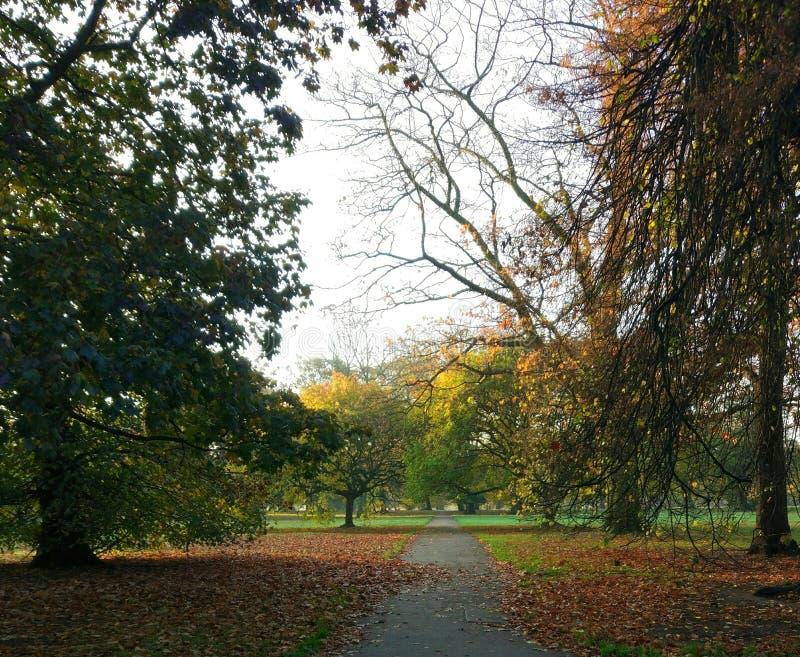 Hyde park during autumn royalty free stock photos