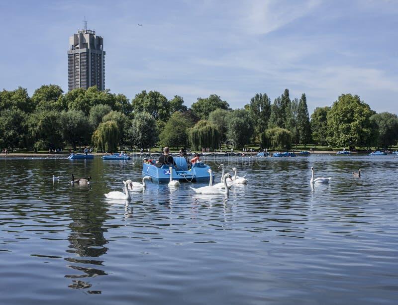 Hyde Park, de bezinning en de zwanen stock foto