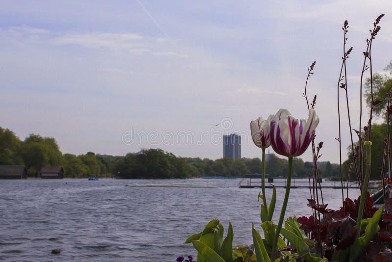 Hyde Park Flowers arkivbilder