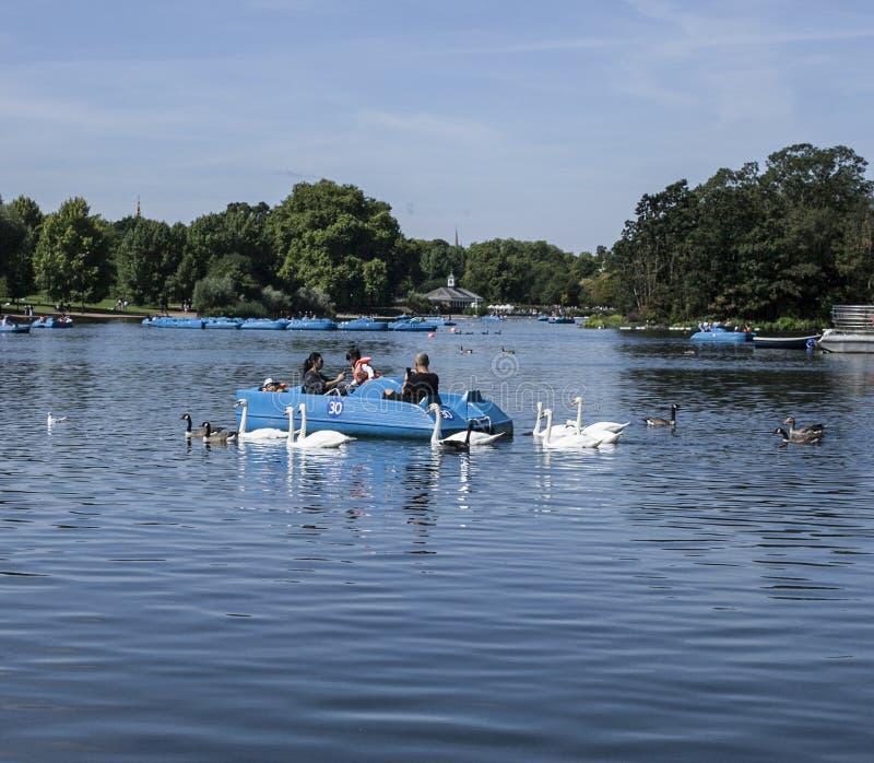 Hyde Park, het meer met zwanen en eenden royalty-vrije stock afbeelding
