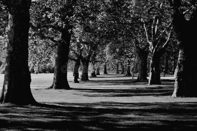 Hyde Park in London, UK royalty free stock photo